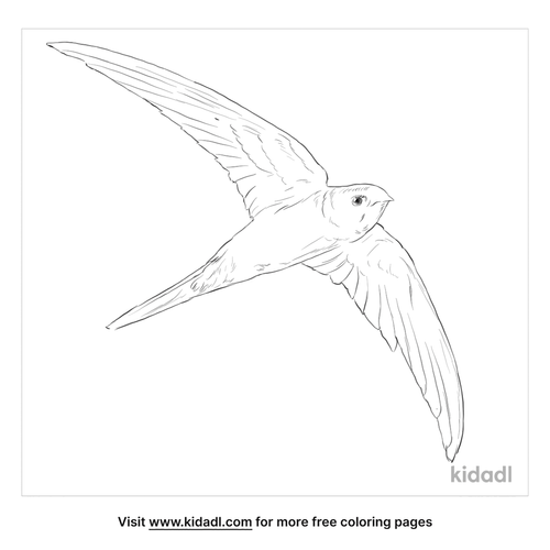 asian-palm-swift-coloring-page