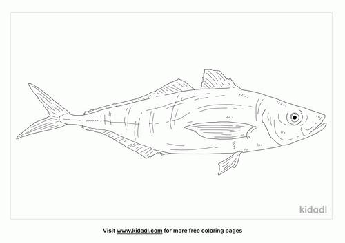 atlantic-horse-mackerel-coloring-page