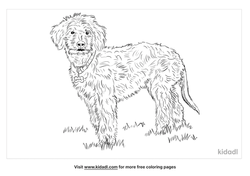 aussiedoodle-coloring-page