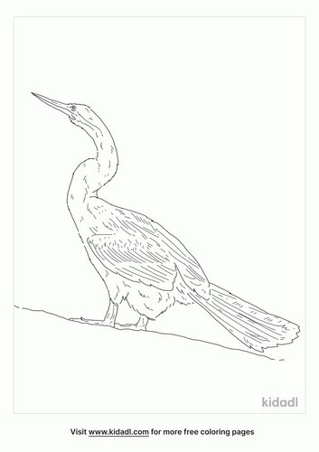 australasian-darter-coloring-page