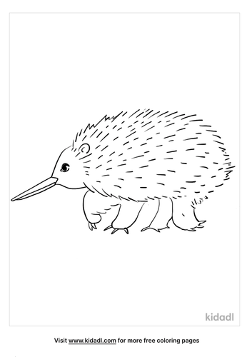 australian animals coloring page_3_lg.png