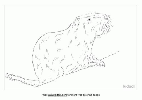 australian-swamp-rat-coloring-page