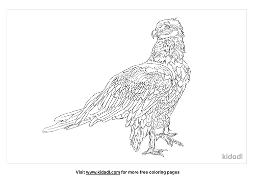 australian-wedge-tail-eagle-coloring-page