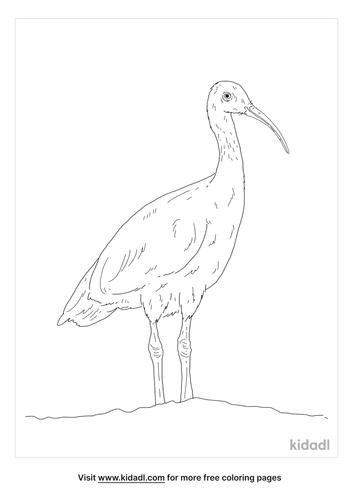 australian-white-ibis-coloring-page
