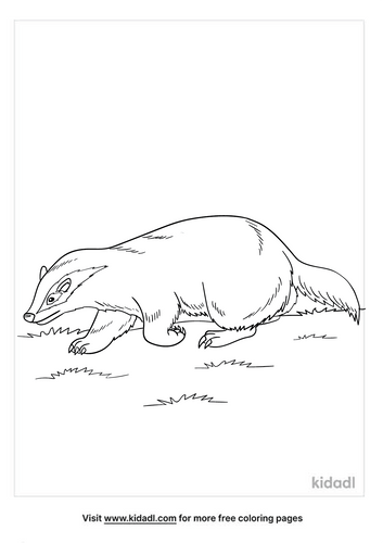 badger coloring page-3-lg.png