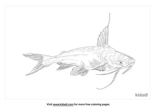 bagre-fish-coloring-page