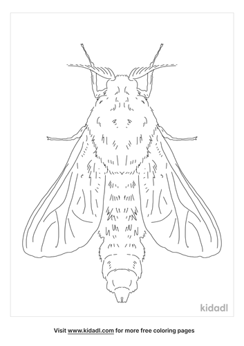 bagworm-moth-coloring-page