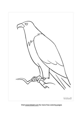 bald eagle colouring pages-4-lg.png