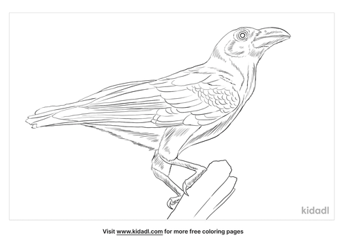 banggai-crow-coloring-page
