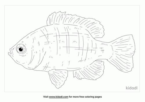 bantam-sunfish-coloring-page