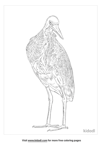 bare-throated-tiger-heron-coloring-page