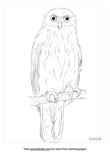 barking-owl-coloring-page