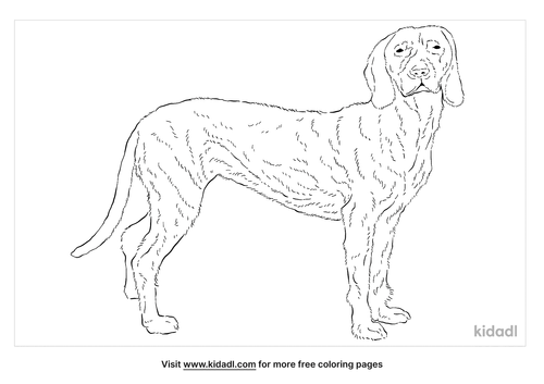 bavarian-mountain-hound-coloring-page