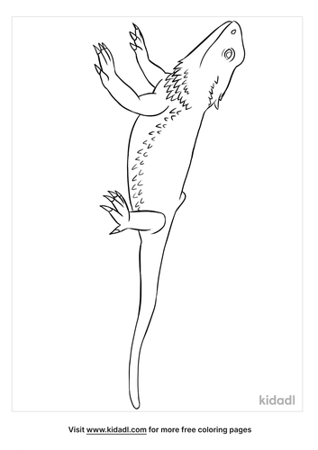 bearded dragon coloring page-2-lg.png