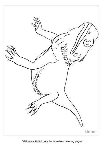 bearded dragon coloring page-4-lg.png