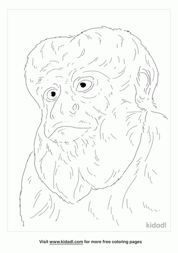 bearded-saki-coloring-page