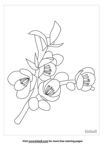 begonia-coloring-pages-2-lg.png