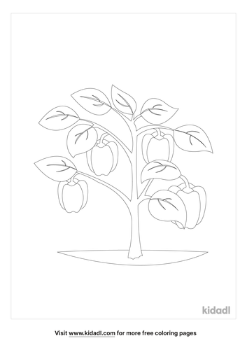 bell-pepper-plant-coloring-page