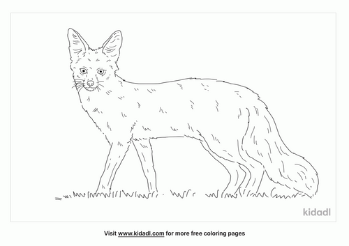 bengal-fox-coloring-page