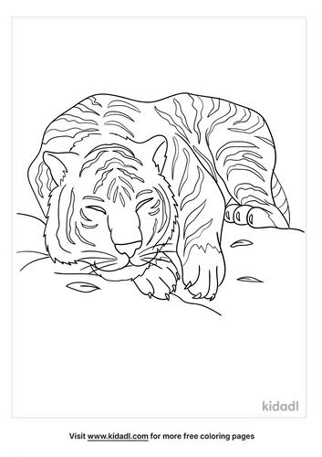 bengal tiger coloring page-5-lg.png