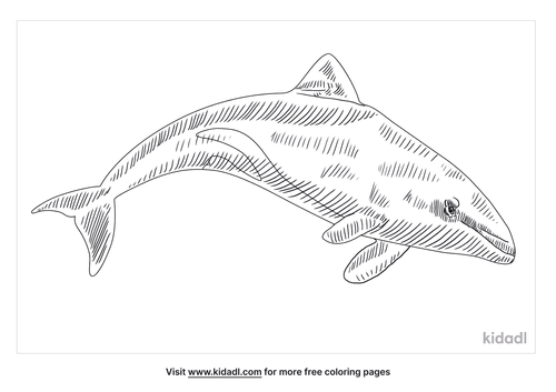 benguela-dolphin-coloring-page
