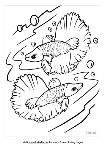 betta fish coloring page-2-lg.png