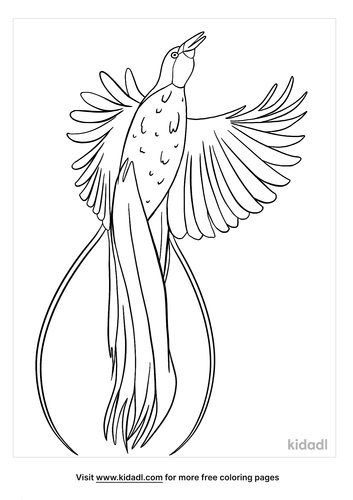 bird of paradise coloring page-2-lg.png