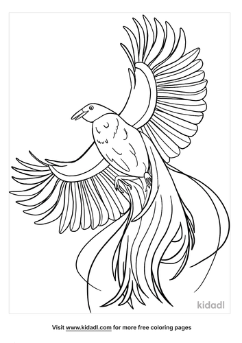 bird of paradise coloring page-3-lg.png