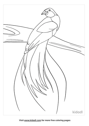 bird of paradise coloring page-4-lg.png