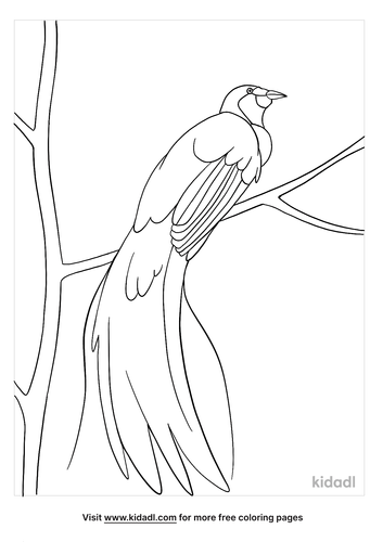 bird of paradise coloring page-5-lg.png