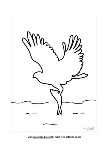 bird outline-4-lg.png
