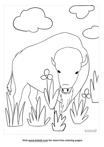 bison coloring page-2-lg.png