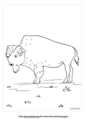 bison coloring page-5-lg.png