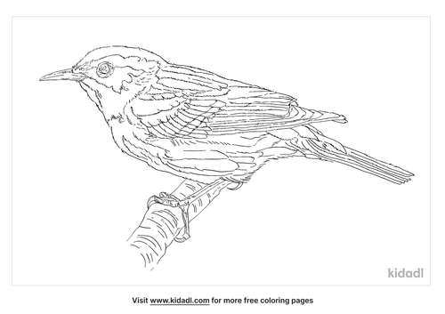 black-and-white-warbler-coloring-page