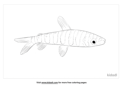 black-banded-leporinus-coloring-page