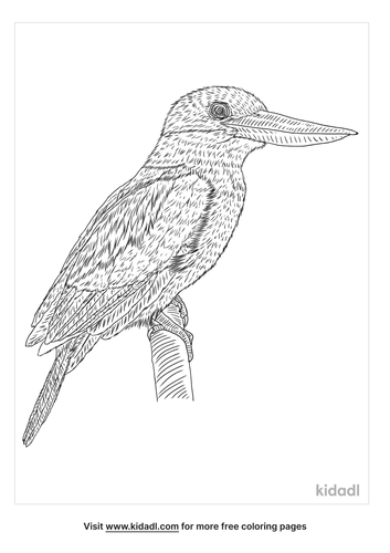 black-capped-kingfisher-coloring-page