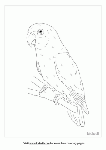 black-cheeked-lovebird-coloring-page