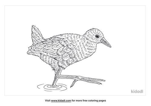 black-crake-coloring-page