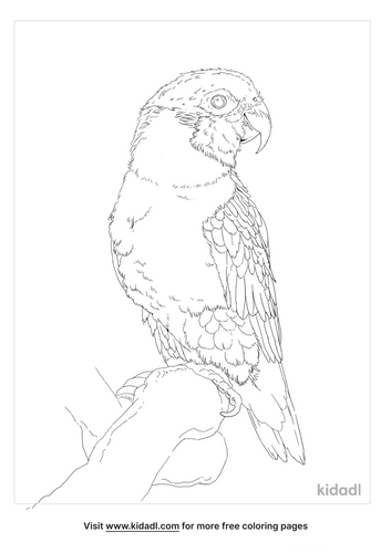 black-headed-caique-coloring-page