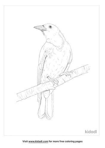 black-hooded-oriole-coloring-page