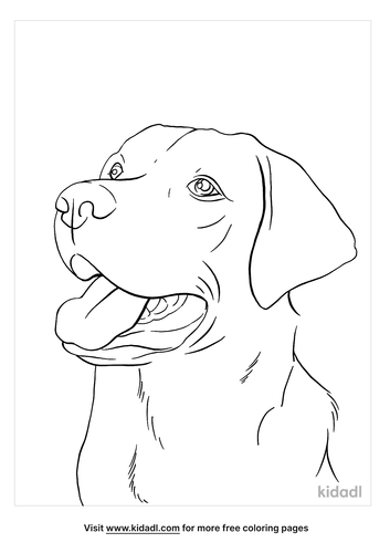black lab coloring page_5_lg.png