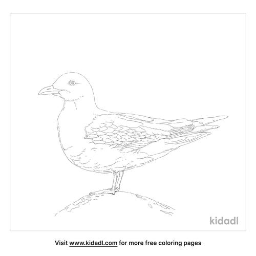 black-legged-kittiwake-coloring-page
