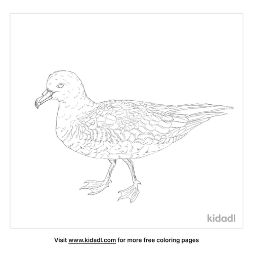 black-petrel-coloring-page