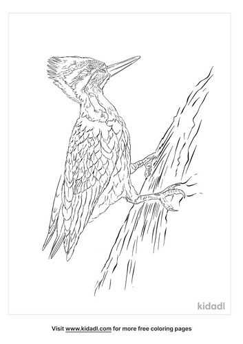 black-rumped-flameback-coloring-page