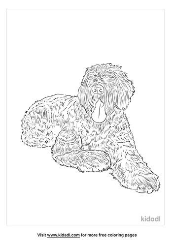 black-russian-terrier-coloring-page