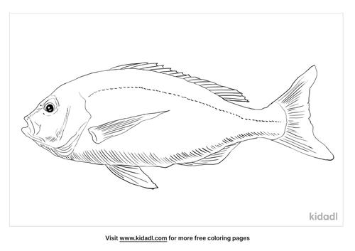 black-snapper-coloring-page