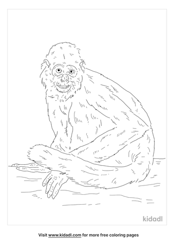 black-spider-monkey-coloring-page