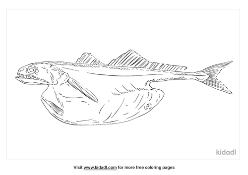black-swallower-coloring-page