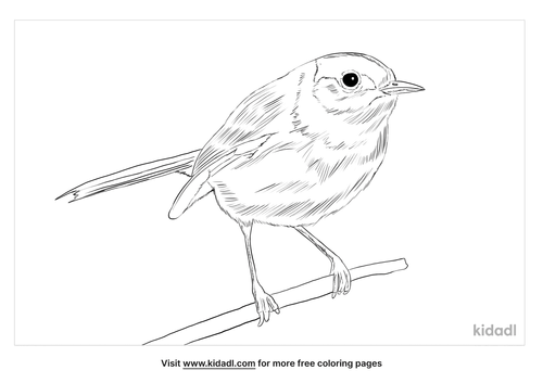 black-tailed-gnatcatcher-coloring-page