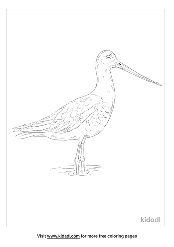 black-tailed-godwit-coloring-page
